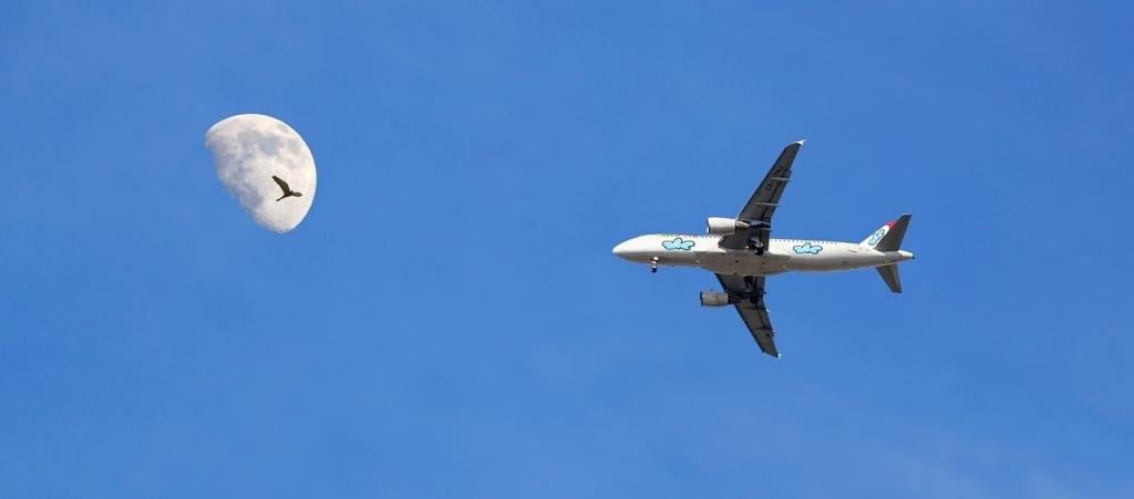 airport-bird-mitigation